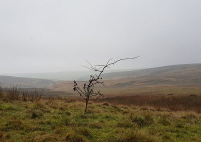 Piggford Moor - one of many Peak District sites snared to trap foxes, December 2018