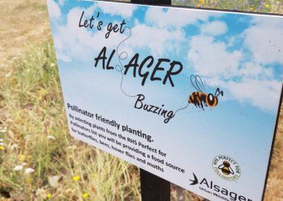 Pollinator-friendly wildflower meadow, Milton Park, Alsager