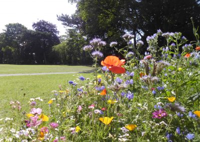 The beautiful wildflower meadow in Milton Park, Alsager, a project by Alsager Urban Wildlife Initiative for Alsager