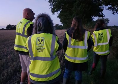 Wounded Badger Patrollers at dusk, Cheshire, 2018